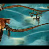 Tree kangaroos and conservation