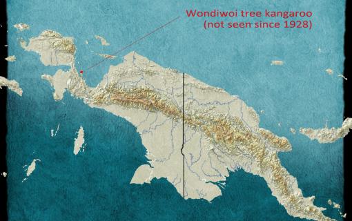 Wondiwoi